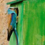 Taller de Caixes nius i passejada d'introducció a la ornitologia